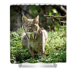 Watchful Mama Lynx Shower Curtain