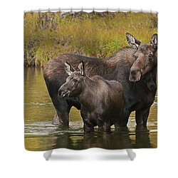 Shower Curtain featuring the photograph Watchful Moose by Gary Lengyel
