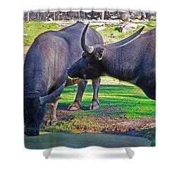 Watching 2 Water Buffalos 1 Water Buffalo Watching Me Shower Curtain
