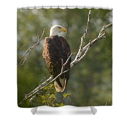 Watching Eagle Shower Curtain