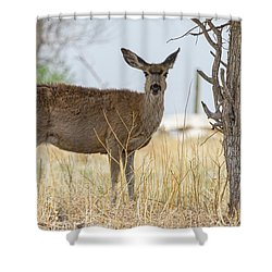 Watching From The Woods Shower Curtain by James BO Insogna