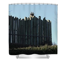 Shower Curtain featuring the photograph Watching by Kim Henderson