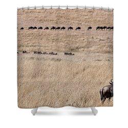 Watching The Herd Shower Curtain