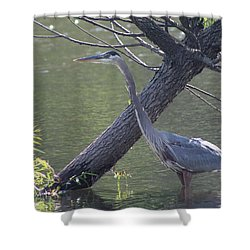 Water Bird And River Tree Shower Curtain