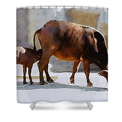 Shower Curtain featuring the photograph Water Buffalo And Feeding Calf by Merton Allen