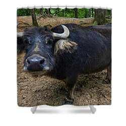 Water Buffalo On Dry Land Shower Curtain