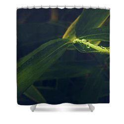 Water Catcher Shower Curtain