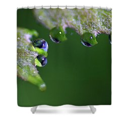 Water Droplet IIi Shower Curtain by Richard Rizzo