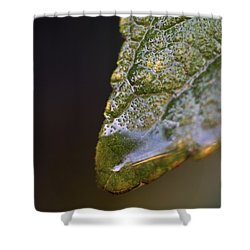 Water Droplet V Shower Curtain by Richard Rizzo