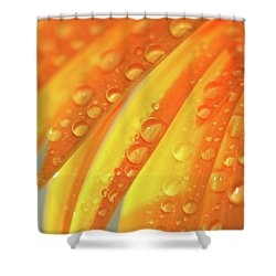 Water Drops On Daisy Petals Shower Curtain by Daphne Sampson