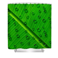 Shower Curtain featuring the painting Water Drops On Palm Leaf by Georgeta Blanaru