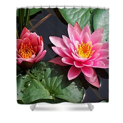 Water Lilies Shower Curtain by Joy Nichols