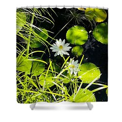 Water Lillies Shower Curtain by John Parry