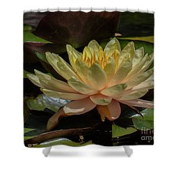 Water Lilly 1 Shower Curtain