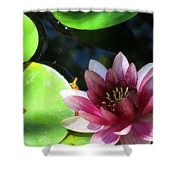 Water Lilly Shower Curtain by Betty Buller Whitehead