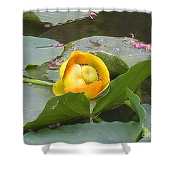 Water Lilly Shower Curtain by Diane Greco-Lesser