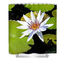 Water Lily 10 Shower Curtain
