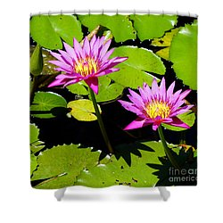 Water Lily 11 Shower Curtain