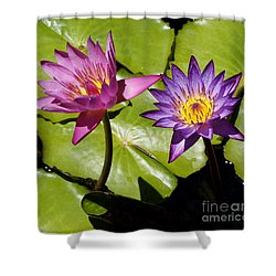 Water Lily 14 Shower Curtain