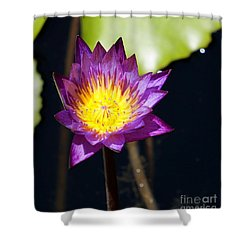 Water Lily 15 Shower Curtain