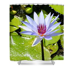 Water Lily 4 Shower Curtain