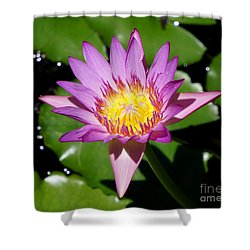 Water Lily 8 Shower Curtain