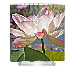 Water Lily Shower Curtain by Catherine Alfidi