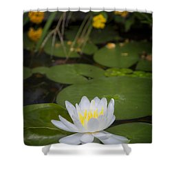 Water Lily IIi Shower Curtain