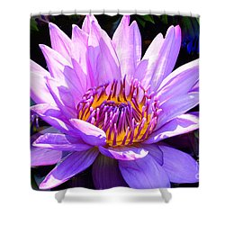 Water Lily In Purple Shower Curtain
