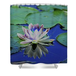 Water Lily  Shower Curtain by Karol Livote