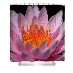 Water Lily On Fire Shower Curtain by Sabrina L Ryan