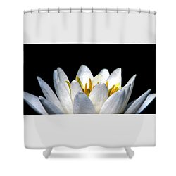 Water Lily Petals Shower Curtain by Angela Davies