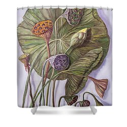 Water Lily Seed Pods Framed By A Leaf Shower Curtain