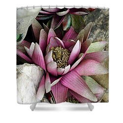Water Lily - Seerose Shower Curtain