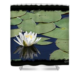 Water Lily With Black Border Shower Curtain by Carol Groenen