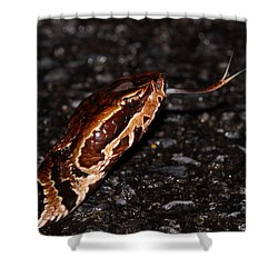 Water Moccasin Shower Curtain