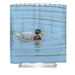 Water Off A Ducks Back Shower Curtain by Allan Levin