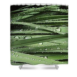 Water On Siberian Iris Shower Curtain