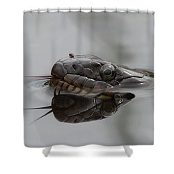 Water Snake And Hitchhiker Shower Curtain by Bruce J Robinson