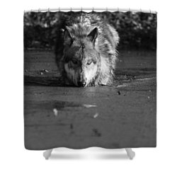 Shower Curtain featuring the photograph Water Wolf I by Shari Jardina