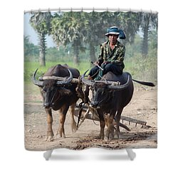 Waterbuffalo Driver Returns With His Animals At Day's End Shower Curtain