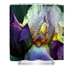 Watercolor Cream And Purple Bearded Iris With Bud 0065 W_2 Shower Curtain