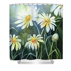 Daisies Flowers  Shower Curtain
