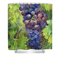 Watercolor Grapes Painting Shower Curtain by Olga Shvartsur