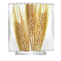 Shower Curtain featuring the painting Watercolor Wheat Illustration by Irina Sztukowski