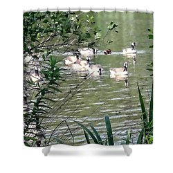 Waterfowl At The Park Shower Curtain by Mikki Cucuzzo