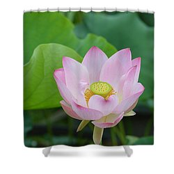 Waterlily Blossom With Seed Pod Shower Curtain by Linda Geiger