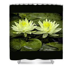 Waterlily Duet Shower Curtain by Venetia Featherstone-Witty