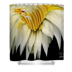 Waterlily Flower Abstract Shower Curtain by Rose Santuci-Sofranko