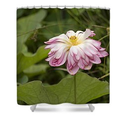 Waterlily Phasing Out Shower Curtain by Linda Geiger